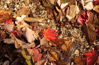 Totally Autumn